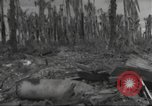 Image of Destruction on Wakde Island from Japanese air raid Wakde Island New Guinea, 1944, second 7 stock footage video 65675059508