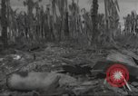 Image of Destruction on Wakde Island from Japanese air raid Wakde Island New Guinea, 1944, second 8 stock footage video 65675059508