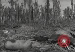 Image of Destruction on Wakde Island from Japanese air raid Wakde Island New Guinea, 1944, second 12 stock footage video 65675059508