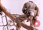 Image of United States Marines Saipan Northern Mariana Islands, 1944, second 2 stock footage video 65675059662