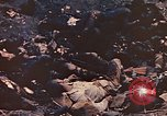 Image of dead Marines Iwo Jima, 1945, second 9 stock footage video 65675059766