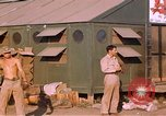 Image of United States airmen Corsica France, 1944, second 11 stock footage video 65675059817