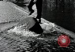 Image of logrolling Longview Washington USA, 1930, second 10 stock footage video 65675059954