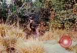 Image of 1st Infantry Division soldiers Vietnam, 1968, second 12 stock footage video 65675060283