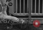 Image of United States soldiers install wire cutters on jeeps Devon England, 1944, second 25 stock footage video 65675060407