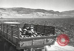 Image of United States munitions dump North Africa, 1943, second 7 stock footage video 65675060464