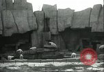 Image of polar bears Chicago Illinois USA, 1934, second 4 stock footage video 65675060546