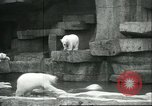 Image of polar bears Chicago Illinois USA, 1934, second 6 stock footage video 65675060546