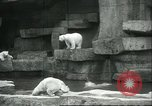 Image of polar bears Chicago Illinois USA, 1934, second 7 stock footage video 65675060546