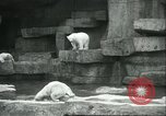 Image of polar bears Chicago Illinois USA, 1934, second 8 stock footage video 65675060546