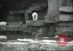 Image of polar bears Chicago Illinois USA, 1934, second 9 stock footage video 65675060546