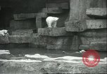Image of polar bears Chicago Illinois USA, 1934, second 10 stock footage video 65675060546