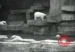 Image of polar bears Chicago Illinois USA, 1934, second 11 stock footage video 65675060546