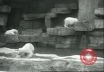 Image of polar bears Chicago Illinois USA, 1934, second 12 stock footage video 65675060546