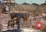 Image of Cape Rasocolmo Sicily Italy, 1943, second 2 stock footage video 65675060639