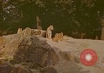 Image of Eva Braun at zoo Berchtesgaden Germany, 1940, second 5 stock footage video 65675060660