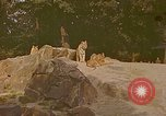 Image of Eva Braun at zoo Berchtesgaden Germany, 1940, second 6 stock footage video 65675060660