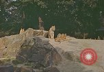 Image of Eva Braun at zoo Berchtesgaden Germany, 1940, second 7 stock footage video 65675060660
