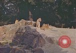 Image of Eva Braun at zoo Berchtesgaden Germany, 1940, second 9 stock footage video 65675060660