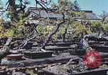 Image of Japanese nursery man Niihama Japan, 1946, second 4 stock footage video 65675060742