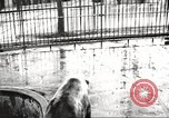 Image of bears United States USA, 1920, second 1 stock footage video 65675060945