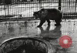Image of bears United States USA, 1920, second 6 stock footage video 65675060945