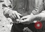 Image of chameleon Phoenix Arizona USA, 1920, second 4 stock footage video 65675060951