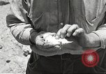 Image of chameleon Phoenix Arizona USA, 1920, second 8 stock footage video 65675060951