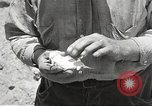 Image of chameleon Phoenix Arizona USA, 1920, second 10 stock footage video 65675060951