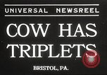 Image of young cows Bristol Pennsylvania USA, 1934, second 1 stock footage video 65675061024