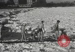 Image of Pplar Bear swim Chicago Illinois USA, 1934, second 11 stock footage video 65675061029