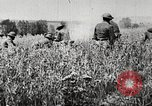 Image of United States troops advance Argonne forest France, 1918, second 12 stock footage video 65675061250