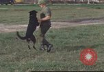 Image of 377th Air Police Security Squadron Vietnam, 1966, second 9 stock footage video 65675061422