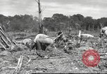 Image of C-47 Skytrain aircraft Burma, 1943, second 9 stock footage video 65675061563
