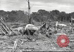 Image of C-47 Skytrain aircraft Burma, 1943, second 11 stock footage video 65675061563