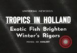 Image of tropical fishes Holland Netherlands, 1965, second 1 stock footage video 65675061772