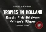 Image of tropical fishes Holland Netherlands, 1965, second 3 stock footage video 65675061772