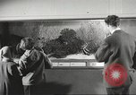 Image of tropical fishes Holland Netherlands, 1965, second 8 stock footage video 65675061772