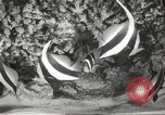 Image of tropical fishes Holland Netherlands, 1965, second 12 stock footage video 65675061772