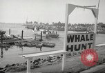 Image of Grey Whale California United States USA, 1966, second 9 stock footage video 65675061790