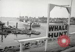 Image of Grey Whale California United States USA, 1966, second 12 stock footage video 65675061790