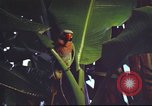 Image of United States airman Vietnam, 1965, second 8 stock footage video 65675062004