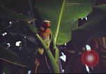 Image of United States airman Vietnam, 1965, second 10 stock footage video 65675062004