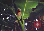 Image of United States airman Vietnam, 1965, second 12 stock footage video 65675062004