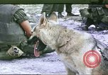 Image of scout dogs Vietnam, 1966, second 1 stock footage video 65675062005