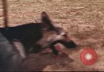 Image of sentry dogs South Vietnam, 1967, second 7 stock footage video 65675062006