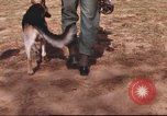 Image of sentry dogs South Vietnam, 1967, second 9 stock footage video 65675062006
