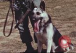 Image of sentry dogs South Vietnam, 1967, second 5 stock footage video 65675062007