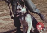 Image of sentry dogs South Vietnam, 1967, second 6 stock footage video 65675062007