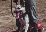 Image of sentry dogs South Vietnam, 1967, second 7 stock footage video 65675062007